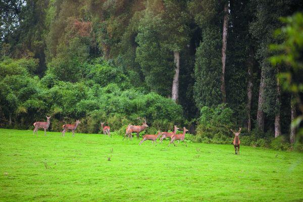 Relajo en Termas de Puyehue Wellness & Spa Resort, con noche gratis