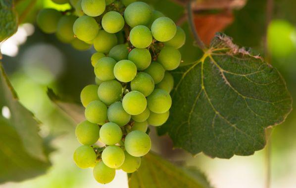 Experiencia para amantes del vino en Hotel NOI Blend